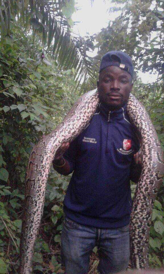 MEHNN!! See The 15 Feet Python Killed By Hunter In Osogbo 1