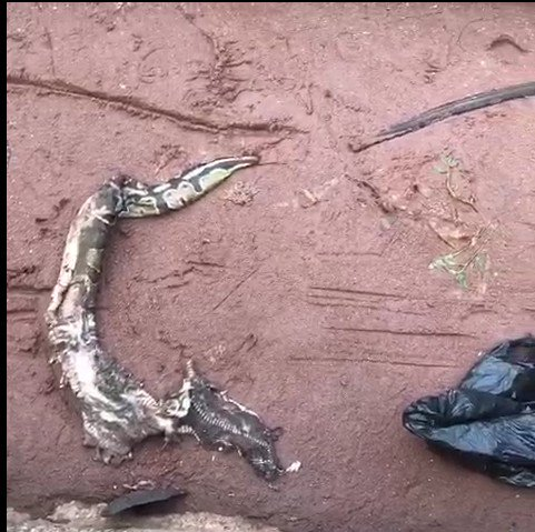 Lady Turns Into Snake In Benin After Alighting From Yahoo Boy's Benz 1